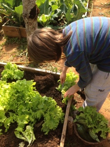 Se você tiver uma hortinha em casa use-a como parque de diversões