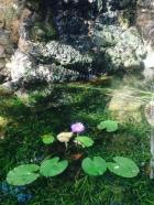flor aquatica antes que eles crescam